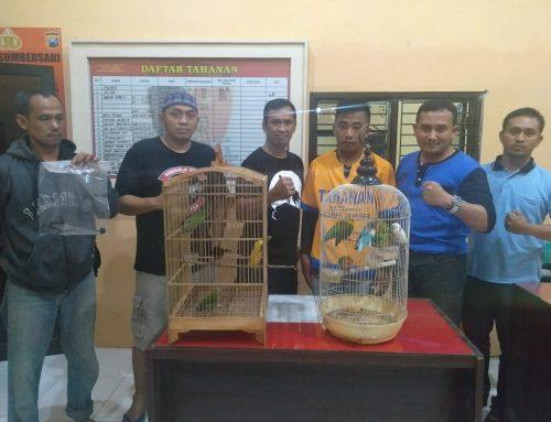 Tim Srigala Bekuk Spesialis Pencuri Burung
